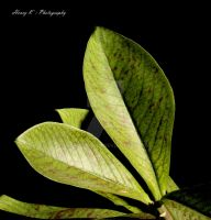 Leaves-in-green by fotoponono