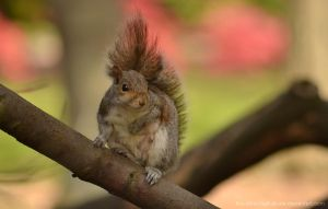 Squirrel I by The-Other-Half-Of-Me