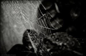 Spider Web by steve249