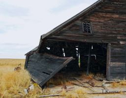 Old Barn by TRunna