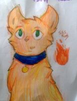 SSSwarrior cats - Rusty by Tootsie--Pop