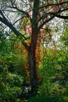 Red-haired Tree by Aenea-Jones