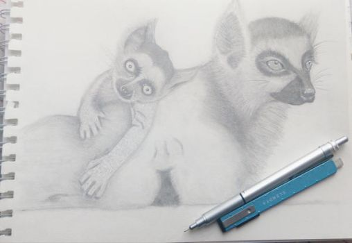 Drawing Lemur.. by esraolkun