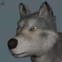 Wolf WIP by xaotherion