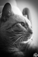 My Good Side, A Cat's Fuzzy Portrait by patganz