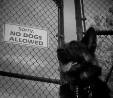 No Dogs Allowed by Evanescent-Chaos