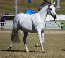 STOCK - Gold Coast Show 105 by fillyrox