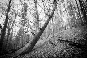 Ancient Woodland by KarelSopek