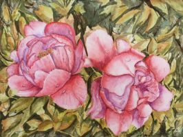 Peonies by User-404