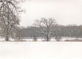 Tree On Snowy Field by Visigothic