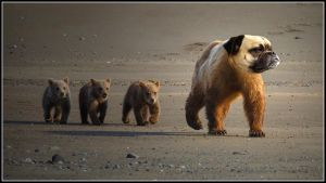 3 bear cub,, follow-up ... by fisher57