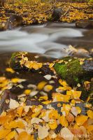 Mcgree Creek Autumn by narmansk8