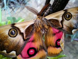 Butterfly of Talcahuano by Suez-H3
