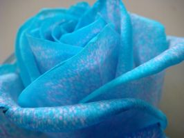 Blue Roses 06 by Sylys-stock