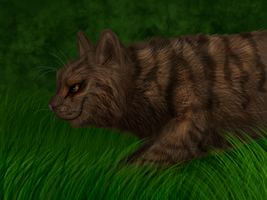 Tigerstar by Speck--Of--Dust