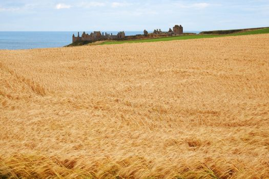 Dunnottar Castle ruins 1 by wildplaces