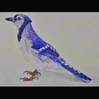 Gma B's Blue Jay by DABECKER53
