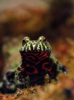 Oriental fire-bellied toad by MireilleLeurs