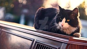 Piano Cat by DausenMoore-Photos