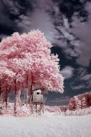 Cotton Candy Land - I by sorny