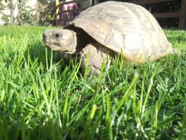 My little turtle by SaralovesMichael