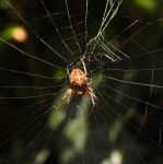 little spider by IrishLordofKerry