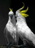 Parrot love by Yudet