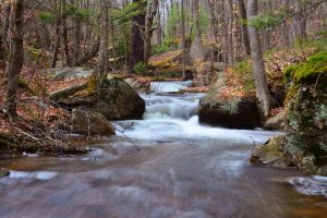 Unnamed Stream by PixieTheCat