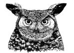 Owl by Adoulie
