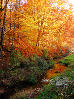 stream in color lll by loreleft27