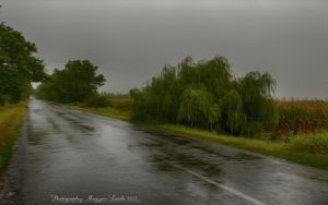 The end of the summer? Hungarian landscapes. by magyarilaszlo