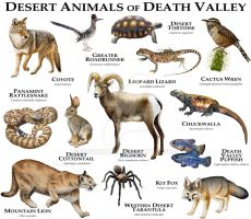 Desert Animals of Death Valley by rogerdhall