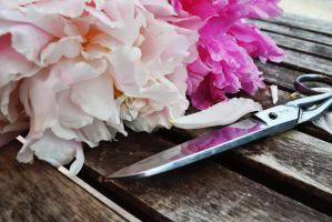 Scissors and Peonies by CarlaAlbiero