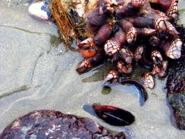 Goose Barnacles 2 by KeyLogs