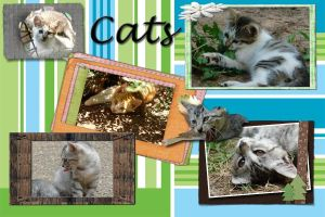 Cat Collage by Landras