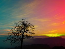 Old tree and colorful sundown panorama by patrickjobst