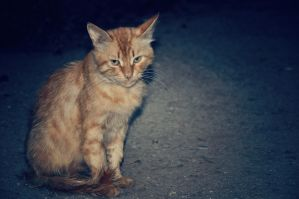 Homeless cat by Plakitina