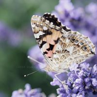 The butterfly effect by 6eternity9