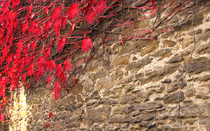 Red leaves invasion by Pierre-Lagarde