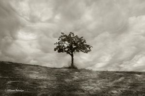 My tree by lpetrusa