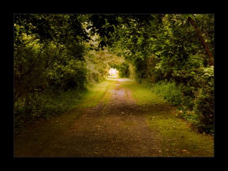 Old Forest Road by jon