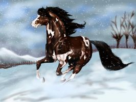 Winter Gallop by equusferus