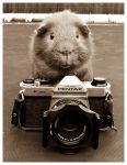 Guinea Photography by elenril