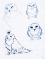 Snowy owl sketches - harfang by lejellycat