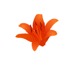 Tiger Lily with Dots Vector by Wistfulwish