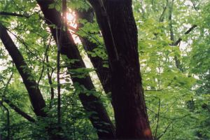 Light through Trees by drywall420