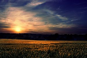 Sunset Field by BELFASTBAP