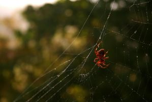 Spider by Carthaginian
