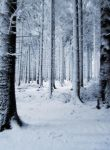 Snow Background by PVS by pixievamp-stock