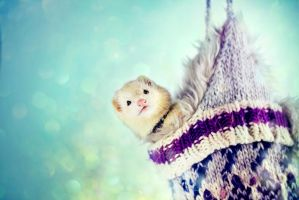 Florence the Ferret by akrPhotography